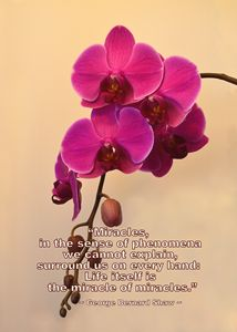 Orchids with Miracles Quote - Catherine Sherman