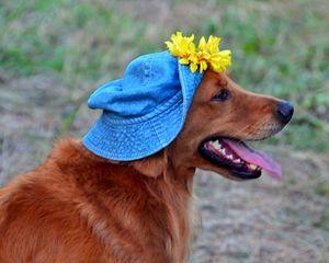Smiling Golden Retriever in Hat - Catherine Sherman