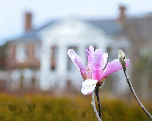 Magnolia Blossom at Boone Hall - Catherine Sherman