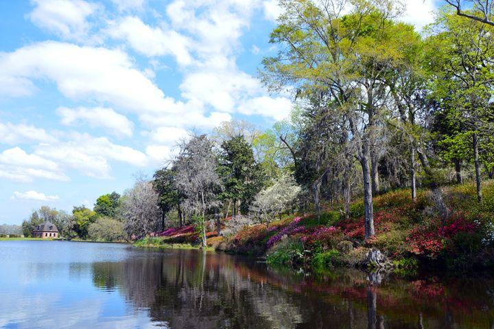 Azaleas at Rice Mill Pond - Catherine Sherman