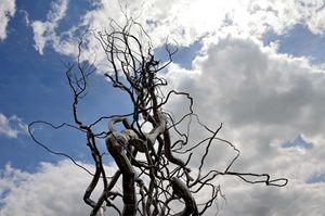 Metal Tree Sculpture - Catherine Sherman