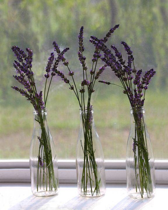 Lavender Bouquets on a Window Sill - Catherine Sherman