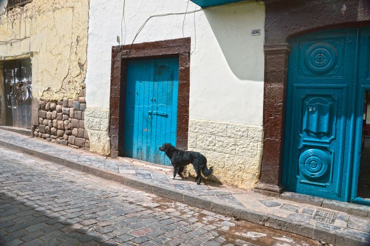 Black Dog in Cusco, Peru - Catherine Sherman