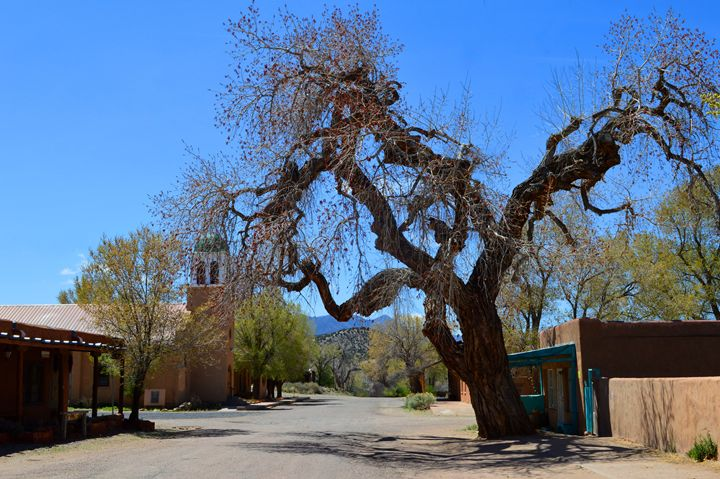 Hanging Tree, Cerrillos, New Mexico - Catherine Sherman
