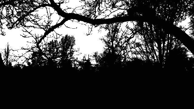 Black and White - B Rittenhouse