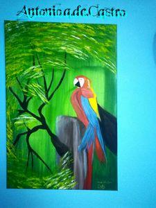 venezuela ARA parrot