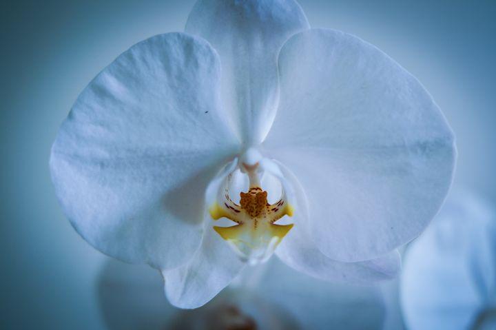 White Orchid - Art of Jaikumar