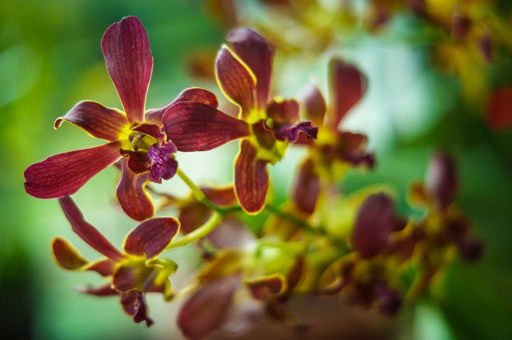 Orchids - Art of Jaikumar
