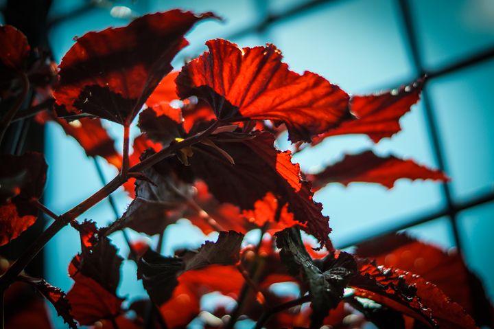 Red Plant againts blue sky - Art of Jaikumar