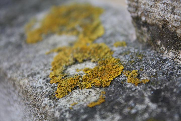 Moss - Relationshit