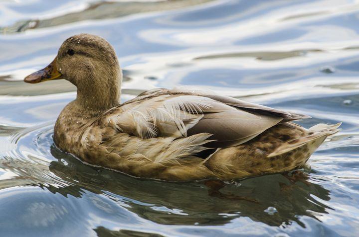 Floating - Chad Sedam Photograhy