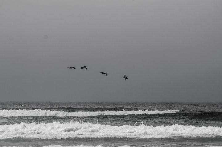 Four Pelicans - Chad Sedam Photograhy