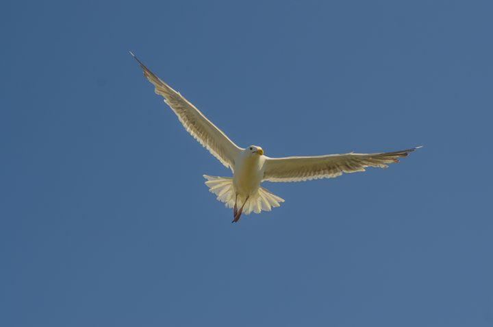 In Flight - Chad Sedam Photograhy