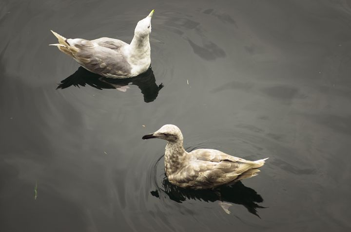 Floating Together - Chad Sedam Photograhy