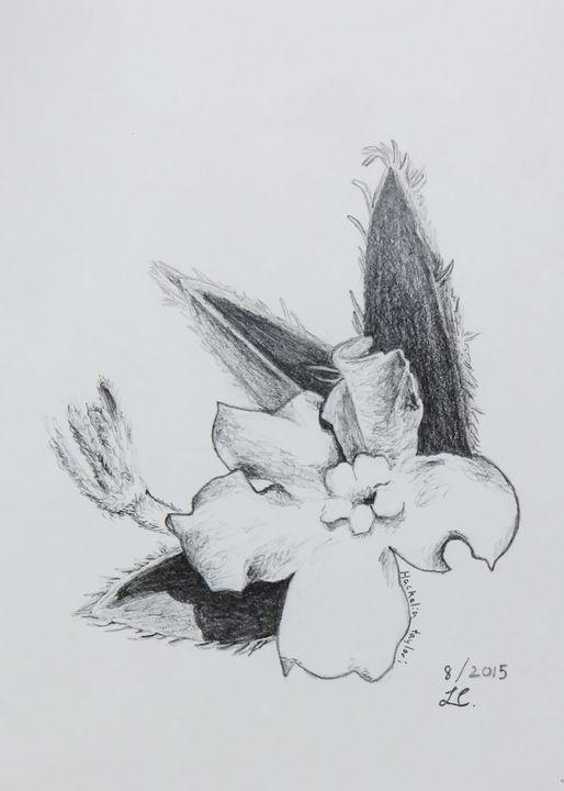 Hackelia taylori - IvyRadicans Art