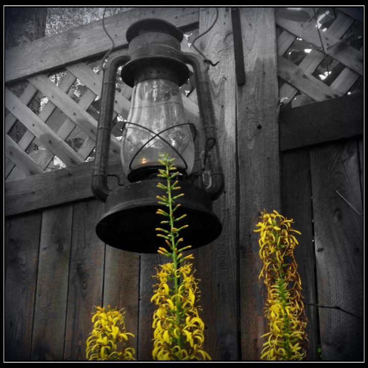 Lonely Lantern - Harmony Hands Art