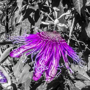 Passion Purple - PouringMyArtOut