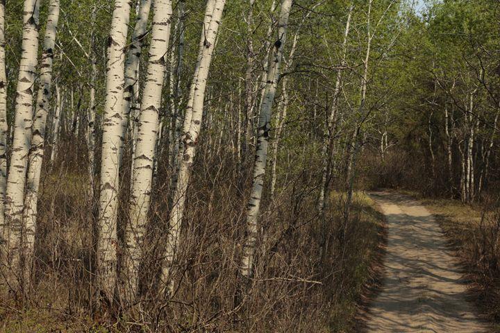 Forest - Oleksandr Liashenko Art