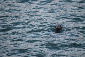 Seal - Graham Bruce Photography