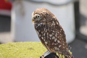 Bird of Prey - Graham Bruce Photography