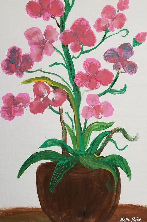 Orchids - Belle Price