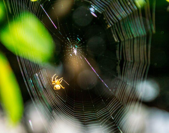 Spider Web - Belle Price
