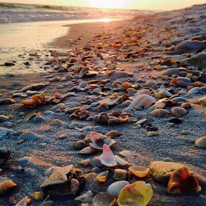 Seashell Sunset - Allison's photography
