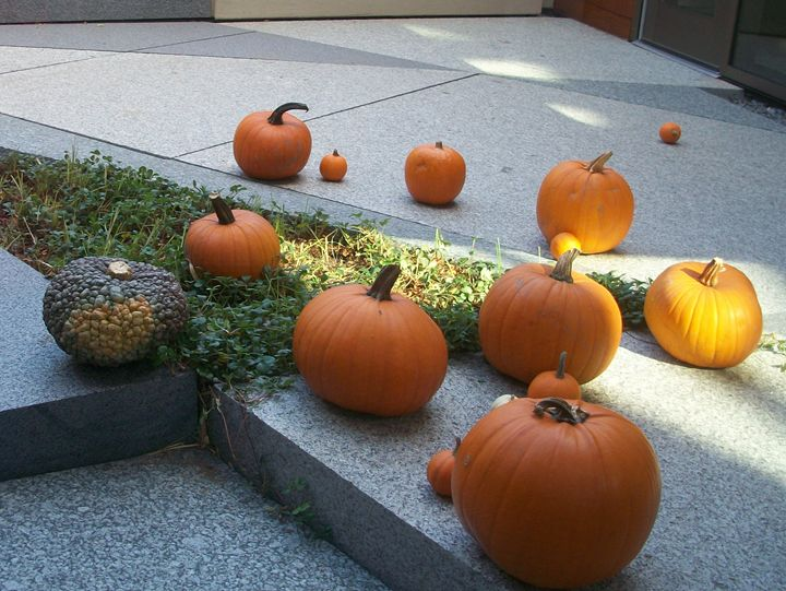 Fall Pumpkins - J. Humlie Gallery
