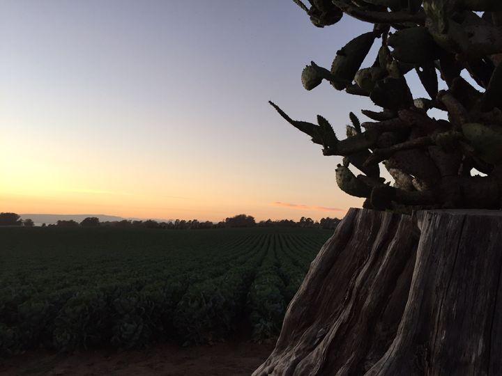 Cactus Sunset - Susan Maletta