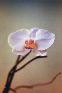 Orchids pallete - Luisa Sodomaco