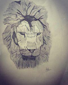 Male Lion portrait - ash
