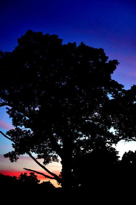 Tree's last light - 210 Photography