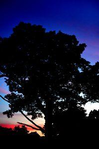 Tree's last light