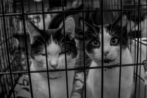 Kittens in Jail