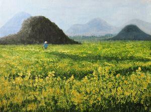 canola flower field
