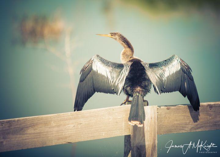 Basking in the sun - James A. McKnight Photography