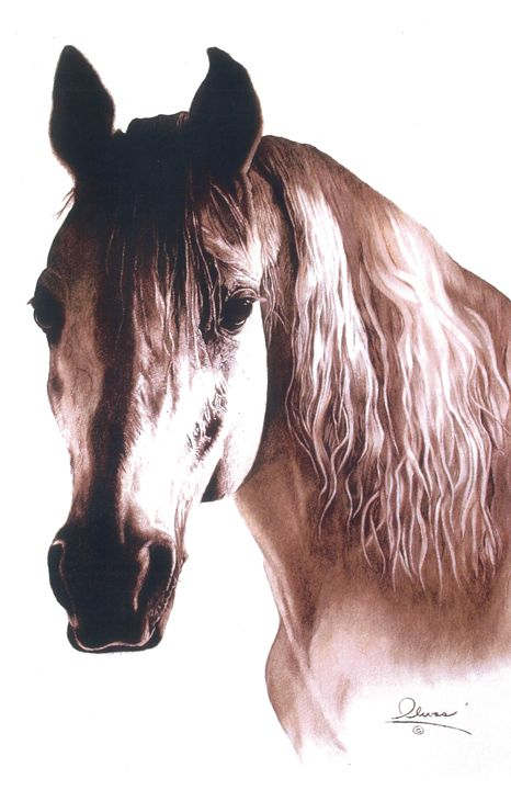 Marilyn the Horse - 'The Olivas Collection'
