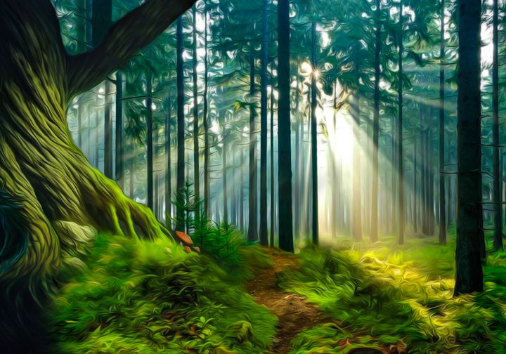Sunny Forest - Joker's Gallery