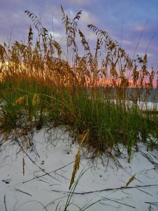 SUNRISE AND SEA OATS - C. A. Cerreto Art & Photography