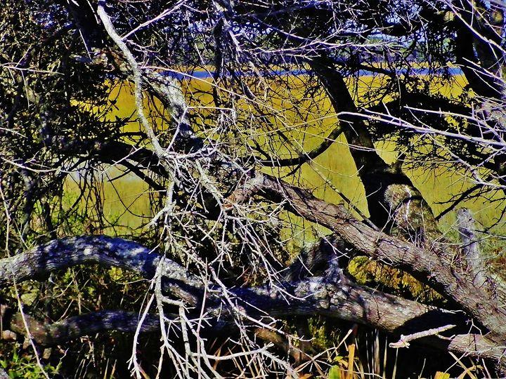 FOLLY RIVER - C. A. Cerreto Art & Photography