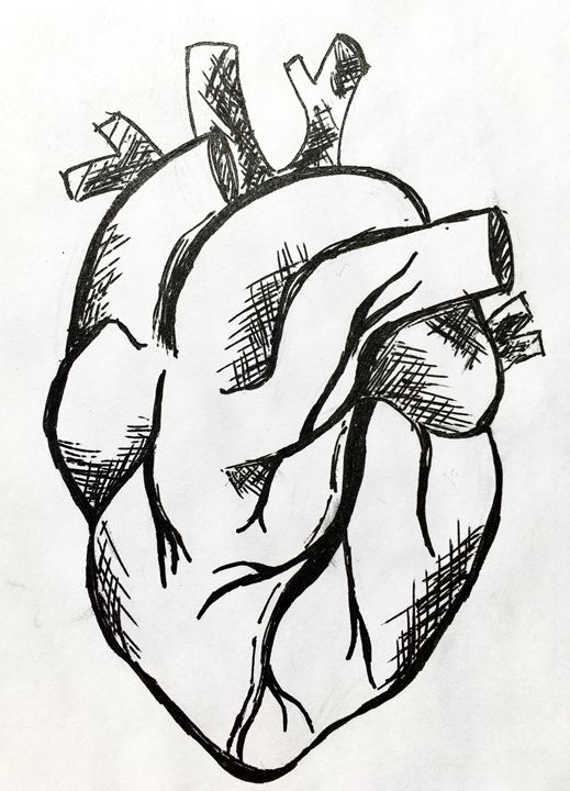 The Heart - Drawings & Sketches
