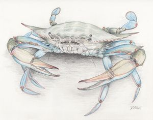 Blue Crab - Darren Mitchell