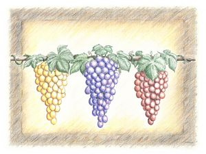 Three Bunches of Grapes - Darren Mitchell