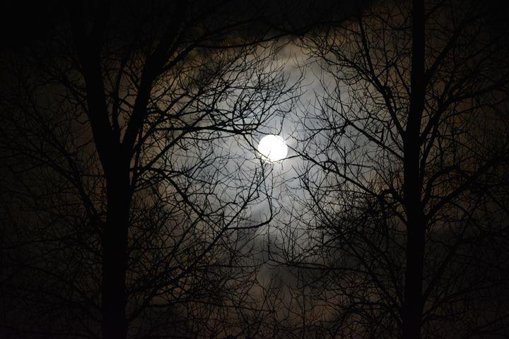 Midnight sky - Suzanne Morrison