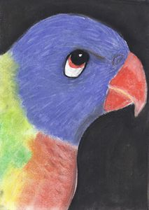 Bluey the Rainbow Lorikeet