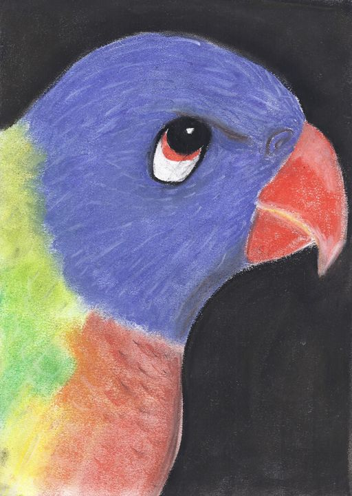 Bluey the Rainbow Lorikeet - Andrea Devos