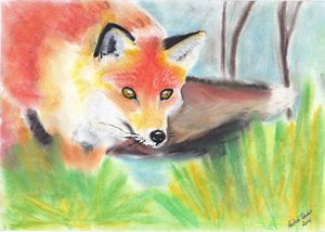 Fox Watching - Wildlife Series