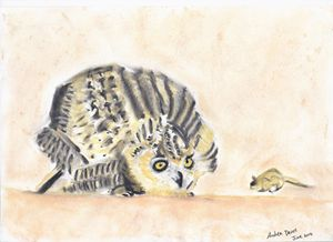 Owl hunting a Mouse
