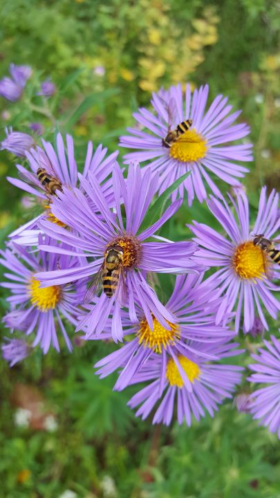 Bees and Flowers - Megan