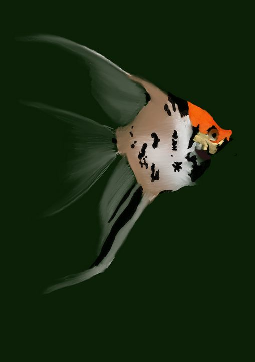 Koi Veil Angelfish - JessAndrade Designs